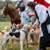 Blessing of Hounds
